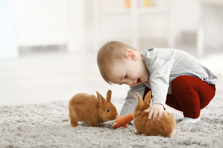 Rete Per Gatti Condominio cibi sani per animali domestici