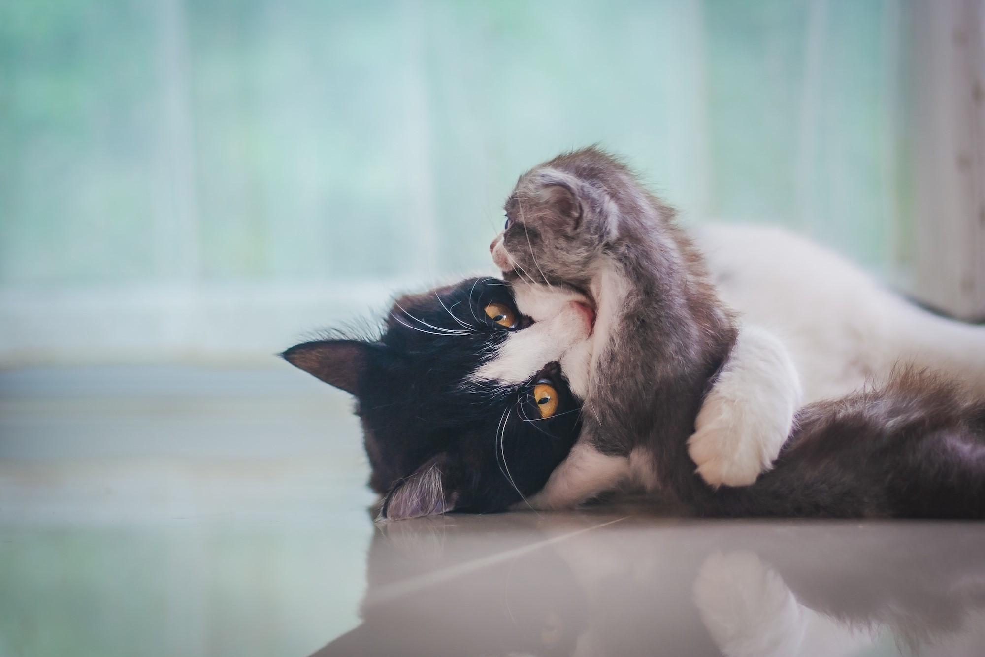 Rete Per Gatti Condominio consigli per rendere il gatto felice a casa