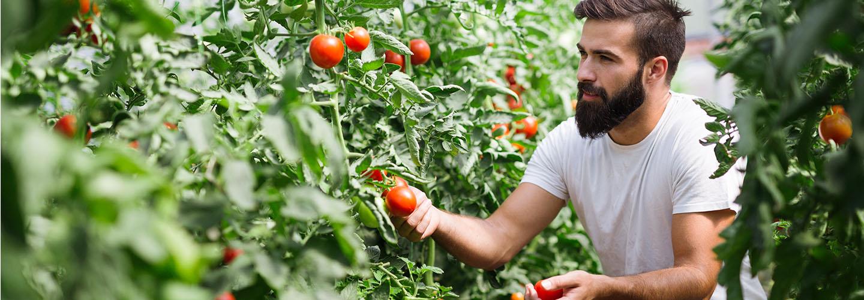 Valore Agricoltura: Assicurazione per Aziende Agricole | Generali